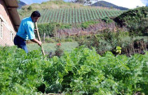 Paradigmas agroecológicos