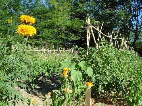 Agroecología: promoviendo una transición hacia la sostenibilidad