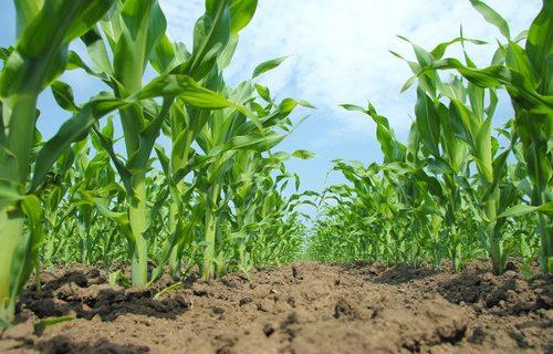 Agropecuaria y nuevo extractivismo bajo los gobiernos progresistas