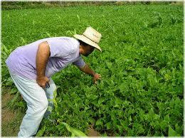 Agroecología: clave para alimentar sosteniblemente al planeta