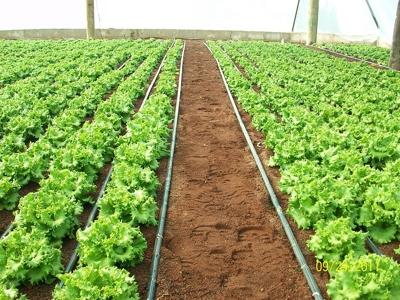 Principios ecológicos en la gestión de los agrosistemas