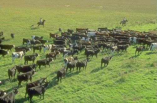 Desarrollo rural en Uruguay