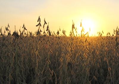 Polémica sobre soja en Uruguay