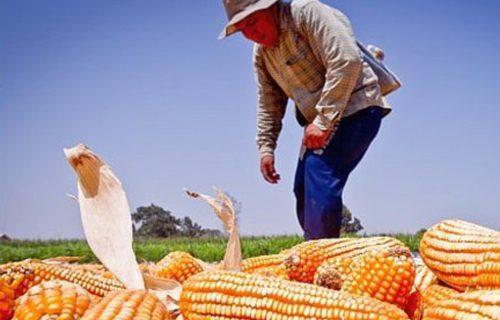 Perú:  aprueban reglamento de la ley de moratoria al ingreso de transgénicos