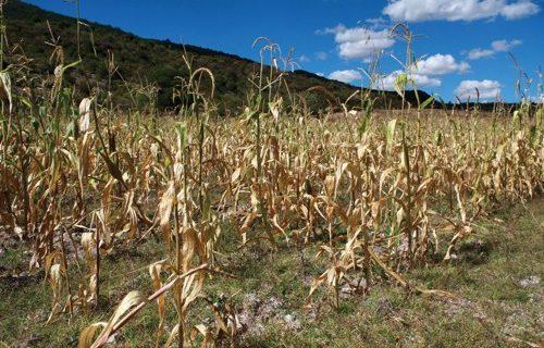FAO: cambio climático incrementa daños en sector agrícola