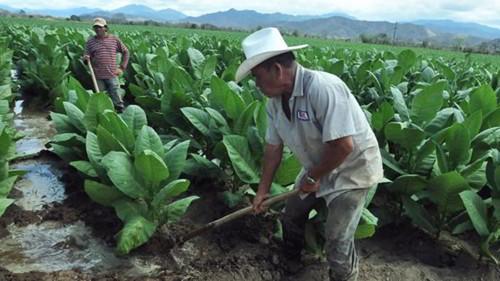 ONU: la agroecología podría duplicar la producción alimentaria