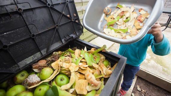 Desperdicio: De la comida producida a nivel mundial solo se consume el 66%