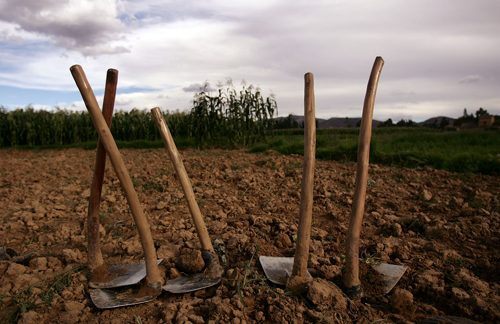 Una alianza para erradicar la pobreza rural