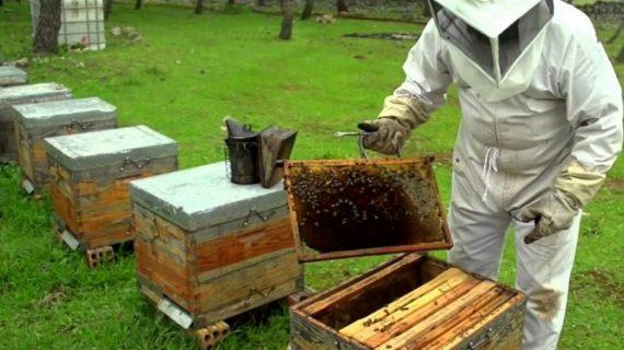 No saben ni escuchan que la miel está contaminada