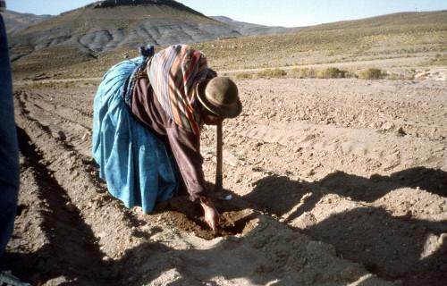 La agropecuaria y la situación alimentaria en Bolivia