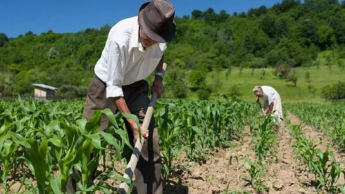 Guatemala: contradicciones agroalimentarias