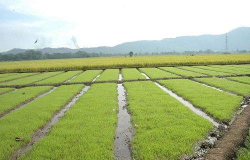 Análisis preliminar de las transformaciones recientes en la agropecuaria