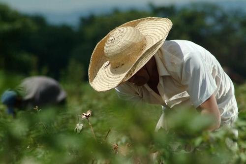 Paraguay: perspectivas agrícolas para el año 2016