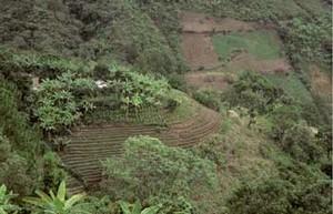 Cambio climático y agricultura campesina: impactos y respuestas adaptativas