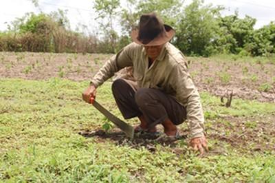 Los proyectos de desarrollo rural bajo la lupa