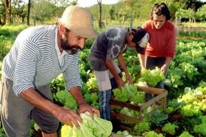 ¿Por qué no hay más y mejores discusiones sobre desarrollo rural?