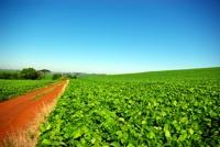 Biocombustibles en Bolivia: entre sueños exportadores y realidades nacionales