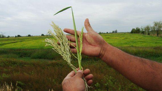 El papel de la agroecología frente a la agroindustria hegemónica