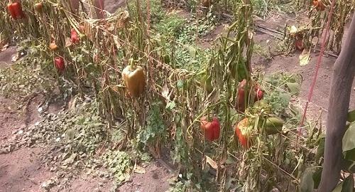 La contaminación rural y la intensificación agropecuaria