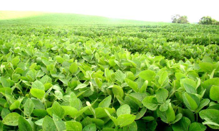 Soja y carne en el Mercosur: comercio, ambiente y agropecuaria